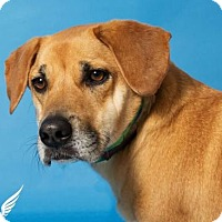 Adopt A Pet :: Junior - Roanoke, VA
