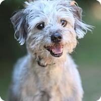 Adopt A Pet :: Bogart - Atlanta, GA