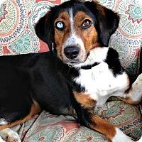 Adopt A Pet :: June Bug - McKinney, TX