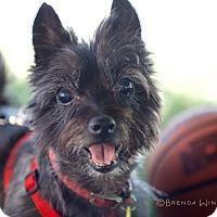Adopt A Pet :: Pixie - Boise, ID