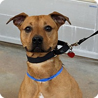Shepherd (Unknown Type) Mix Dog for adoption in Chicago, Illinois - Hero