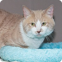 Adopt A Pet :: Malcolm - Elmwood Park, NJ