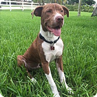 Adopt A Pet :: Barry - Ft. Myers, FL