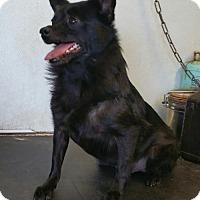 Adopt A Pet :: Miss skip - Yucaipa, CA