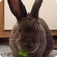 Adopt A Pet :: Smokey - Woburn, MA