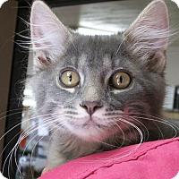 Adopt A Pet :: Pippen II - Buhl, ID