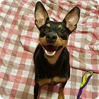 Adopt A Pet :: Kramer - Smithtown, NY