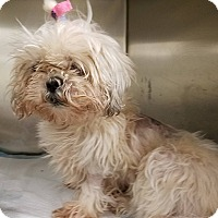Adopt A Pet :: Creme - Ft. Lauderdale, FL
