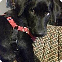 Adopt A Pet :: Sahara - St. Louis Park, MN