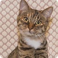 Adopt A Pet :: Pia - Elmwood Park, NJ