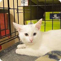 Adopt A Pet :: Sable - Logan, UT