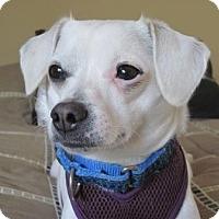 Adopt A Pet :: Pinky - Carlsbad, CA