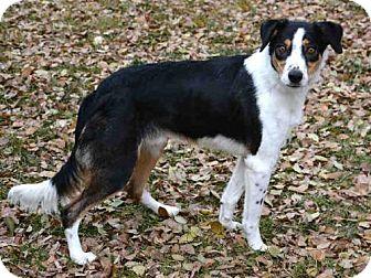 Border Collie Mix Dog for adoption in West Valley, Utah - SPEEDY