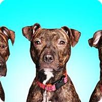 Adopt A Pet :: Sage 3 - Chicago, IL