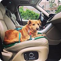 Adopt A Pet :: Princess Leia - Los Angeles, CA