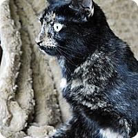 Adopt A Pet :: Scarlett - Columbus, OH