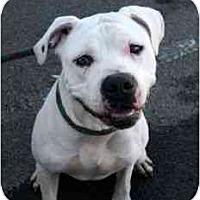 Adopt A Pet :: Carlisle - Canoga Park, CA