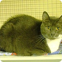 Adopt A Pet :: Willow - Mission, BC