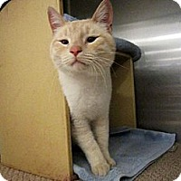 Adopt A Pet :: Captain Catnip - Warminster, PA