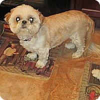 Adopt A Pet :: Emma - Saint Louis, MO