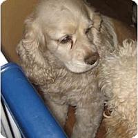 Adopt A Pet :: Mattie - Tacoma, WA