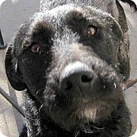 Adopt A Pet :: Talia - Oakley, CA