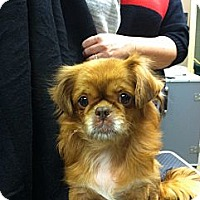 Adopt A Pet :: Lucy - Hazard, KY