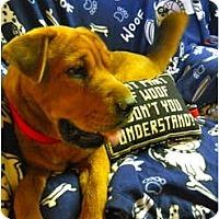 Adopt A Pet :: HONEY - Bear in TN - Wakefield, RI