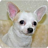 Adopt A Pet :: Dumont - Port Washington, NY