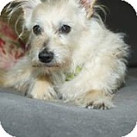 Adopt A Pet :: Rascal - Broomfield, CO