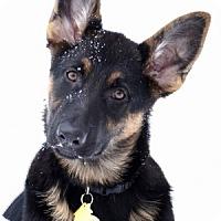 Adopt A Pet :: Kyah - Wayland, MA