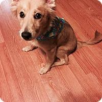 Adopt A Pet :: Taylor - Burlington, NJ