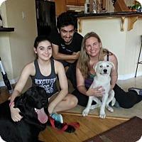 Adopt A Pet :: Yuki - Sacramento, CA