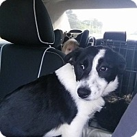 Adopt A Pet :: GiGi - Charlestown, RI
