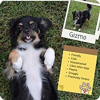 Adopt A Pet :: Gizmo - Carlisle, TN