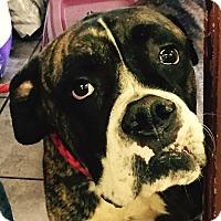 Adopt A Pet :: Biggie - Orlando, FL