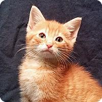Adopt A Pet :: 16-c05-003 Zang - Fayetteville, TN