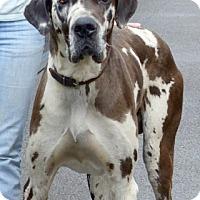 Adopt A Pet :: Bob - Martinsburg, WV