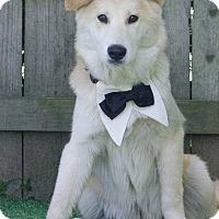 Adopt A Pet :: Ethan - Kimberton, PA