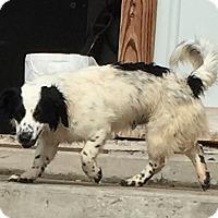 Adopt A Pet :: Luigi - Lewisburg, TN