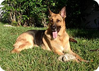 German Shepherd Dog Dog for adoption in Lithia, Florida - SONNY-16- in Orlando Fl