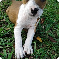 Adopt A Pet :: MINEY - Hollywood, FL