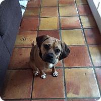 Adopt A Pet :: ADOPTION PENDING! Jake - Prospect, CT