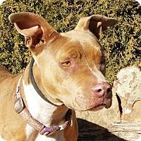 Adopt A Pet :: Pleasant Ms Peaches - Albuquerque, NM
