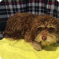Adopt A Pet :: I1266780 - Pomona, CA