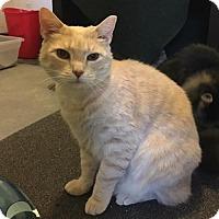 Adopt A Pet :: Prince - Naugatuck, CT