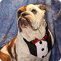 Adopt A Pet :: Jackson - Chicago, IL