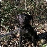Adopt A Pet :: Mo - Coventry, RI