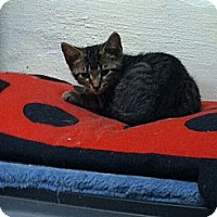 Adopt A Pet :: Baxter - Island Park, NY