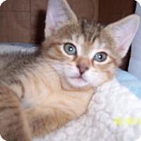 Adopt A Pet :: Mia & Pia - Island Park, NY